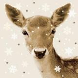 Hübsches Reh - Pretty deer - Jolies cerfs