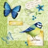 2 Vögel & 2 Schmetterlinge - 2 birds & 2 butterflies - 2 oiseaux et 2 papillons