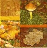 Pilze, Laub und Holz - Mushrooms, leaves and wood - Champignons, feuilles et le bois
