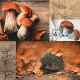 Igel, Vogel, Pilze, Laub - auf dem Waldboden - Hedgehog, bird, mushrooms, leaves, on the forest floor - Hérisson, oiseaux, champignons, feuilles, sur le sol de la forêt