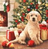 Weihnachtsbaum, Kamin, Geschenke, Hund - Christmas tree, presents, fireplace, dog - Arbre de Noël, cheminée, cadeaux, chien