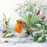 Kleines Rotkehlchen im Schnee - Little robin in the snow - Petit rouge-gorge dans la neige