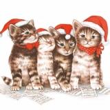 Süße Katzen & Noten - Sweet cats and musical notes - Chats sucrés et notes de musique
