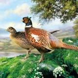 Fasanenpaar am See - Pheasant couple at a lake - Couple Pheasant au bord du lac