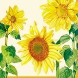 6 hübsche Sonnenblumen - 6 pretty sunflowers - 6 jolis tournesols