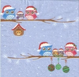 2 Eulenfamilien im Winter - 2 Owl families in Winter - 2 familles de hiboux en hiver