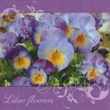 Stiefmütterchen in hübschen Farben - Pansies in pretty colors - Pensées dans de jolies couleurs