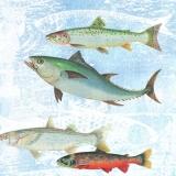 Große Fische - Big fish - Grands poissons