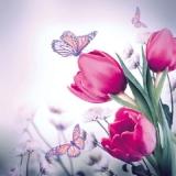 Tulpen und Schmetterlinge - Tulips and butterflies - Tulipes et Papillons