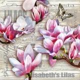 Magnolien, Geschriebenes, Schmetterling, Holz - Magnolias, writing, butterflies, wood - Magnolias, l écriture, les papillons, le bois