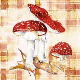 Fliegenpilze - Toad Stool - Fausse oronges