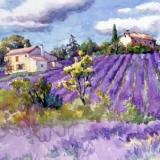 Der Duft von Lavendelfeldern - The smell of lavender fields - Lodeur agréable des champs de lavande