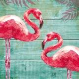 Flamingos - flamants - flamencos - fenicotteros