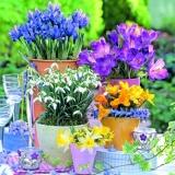 Krokus, Narzissen, Maiglöckchen erblühen - Crocus, narcissi, lilies of the valley blossom - Le crocus, les narcisses, les muguets fleurissent