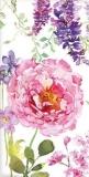 2 Wunderschönes Blumenbeet - Pretty flower bed - Parterre de fleurs Jolie