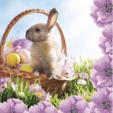 Süßes Häschen im Osterkorb - Cute bunny in easter basket - Lapin mignon dans le panier de Pâques