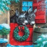 Esel im Stall & Rotkehlchen - Donkeys in stable & Robin - Ane dans lécurie & le rouge-gorge