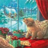 Welpe, Hund am Fenster - Puppy, dog at window - Chiot, chien à la fenêtre