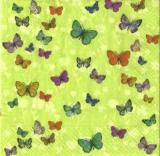 164 Schmetterlinge - 164 Butterflies - 164 Papillons