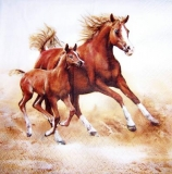 Pferde, Stute & Fohlen im vollen Galopp - Horses, Mare & foal in full gallop - chevaux, jument et son poulain au galop