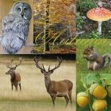 Eule, Rotwild, Eichhörnchen, Pilze & Eicheln im Wald - Owl, deer, squirrel, mushrooms & acorns in the forest - Hibou, cerfs, écureuils, des champignons et des glands dans la forêt