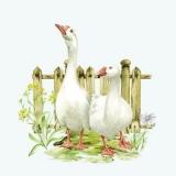 Gänsepaar - Goose couple - Couple doie