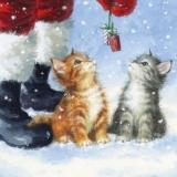 Geschenke für die Katzen-Kinder vom Weihnachtsmann - Gifts for the kitten, cats from Santa - Cadeaux pour le chaton, chats de Santa