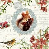 Eichhörnchen, Tannenzapfel & Vogel - Squirrel, pine cones & Bird - écureuil, pommes de pin et des oiseaux