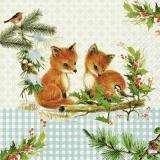 2 kleine Füchse & 2 Vögel - 2 little foxes & 2 birds - 2 petits renards et 2 oiseaux