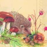 Igel auf Futtersuche - Hedgehog looking for food - Hérisson en cherchant la nourriture