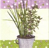 Topfpflanze mit lila Blüten - Potted plant with purple flowers - Plante en pot avec des fleurs pourpres
