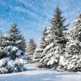 Verschneite Winterlandschaft - Snowy winter landscape - paysage dhiver