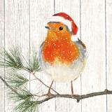 Weihnachtsrotkehlchen - Christmas Robin - Rouges-gorges de Noël