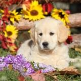 Süßer Hund im Garten - Cute Dog in the Garden - Chien mignon dans le jardin