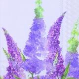 Flieder, Buddleja - Lilac, buddleia - Lilas