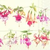 Hübsche Fuchsien in verschiedenen Farben - Pretty fuchsias in different colors - Fuchsias jolis dans les couleurs différentes