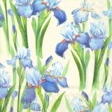 Iris blau, blue, bleu