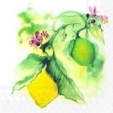 Früchte am Zitronenbaum  - Lemontree , Citrus - Fruits au citronnier