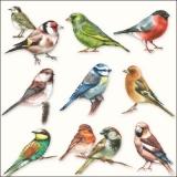 Viele, verschiedene Vögel - Many, different birds - Plusieurs, oiseaux différents
