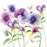Schmetterlinge & Bienen an Stiefmütterchen - Butterflies & Bees at Pansies - Papillons & abeilles sur les pensées