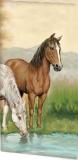 Pferde-Freunde - Horse-friends - Amis de cheval