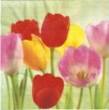 Buntes Tulpenfeld - Colourful tulip field - Champ de tulipes colorées