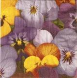 Stiefmütterchenteppich - Pansy carpet - pensées tapis
