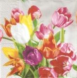 2 farbenfrohe Tulpensträuße - 2 colorful tulip bouquets - 2 bouquets de tulipes multicolores