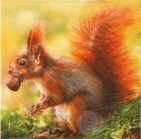 Eichhörnchen mit Eichel - Squirrel with acorn - Écureuil avec gland