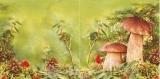 Pilze auf dem Waldboden - Mushrooms in the forest - Champignons sur le sol de la forêt