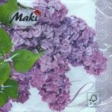 Erblühter Flieder - Flowering Lilac - Lilas fleuri