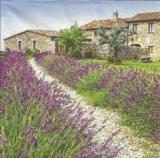 Lavendel aus der Provence - Lavender from the Provence - Lavande de la Provence