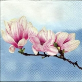 Magnolie blau - Magnolia blue - Magnolia bleu