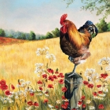 Hahn, Mohnblumen, Felder, Wald - Rooster, Poppies, Fields, Forest - Coq, coquelicots, champs, forêt